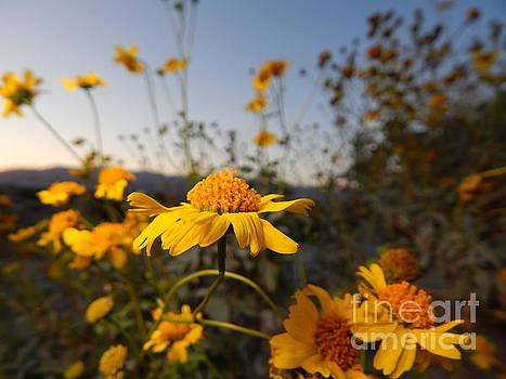Desert Blooms by Chris Tarpening