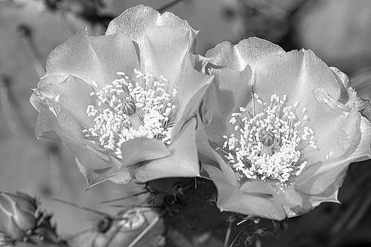Desert Blooms in Black and White by Kathy Clark