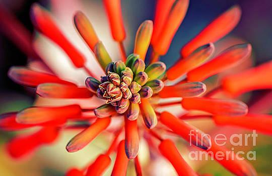 Desert Celebration by Nancy Forehand
