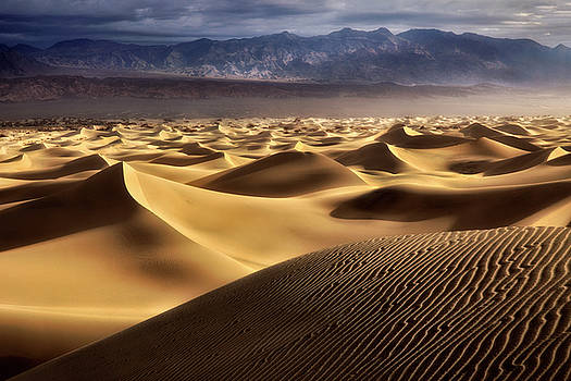 Desert Curves by Nicki Frates