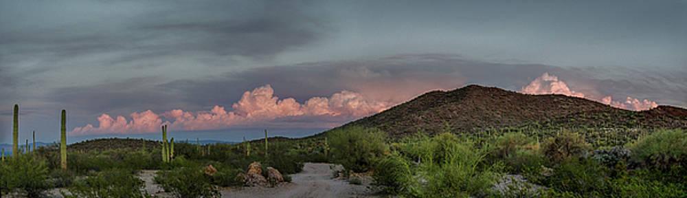 Desert Delight by Gaelyn Olmsted