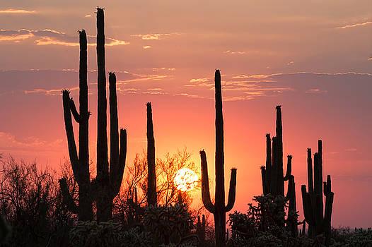 Desert Dreams by Ryan Seek