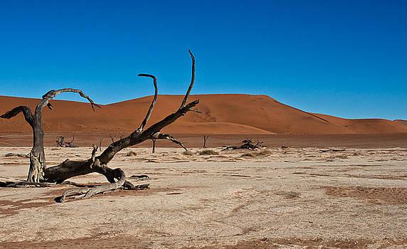 Desert Driftwood  by Sandy Schepis