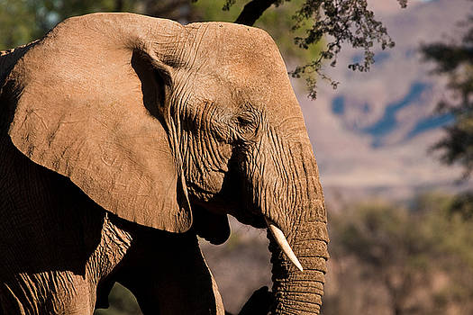 Sylvia J Zarco - Desert elephant profile
