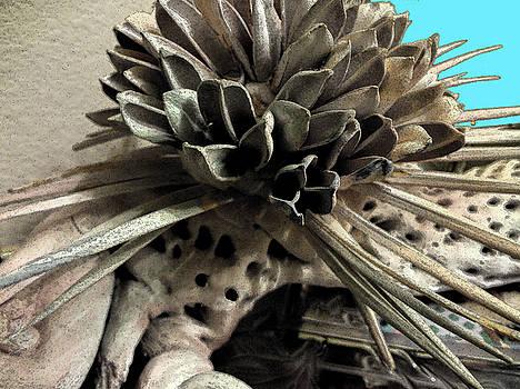 Desert Flora by Bruce Iorio