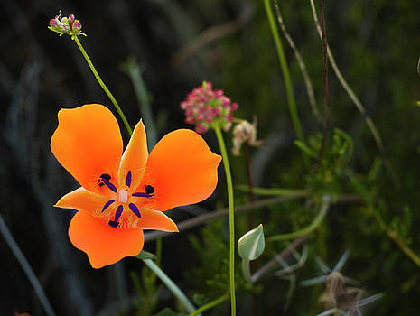 Desert Flower 3 by Penny Lisowski