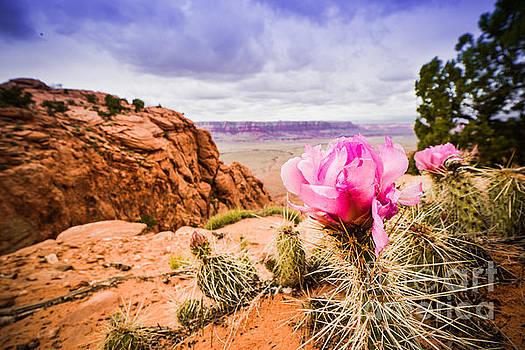 Desert Flower by Jim DeLillo