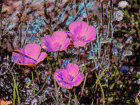 Desert Flowers Abstract by Penny Lisowski