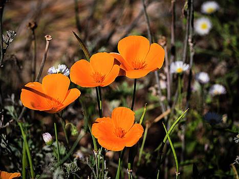Desert Flowers Four Flowers Four by Penny Lisowski