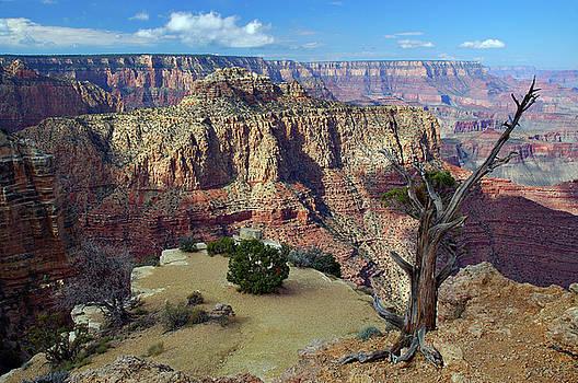 Reimar Gaertner - Desert garden atop a mesa Grand Canyon