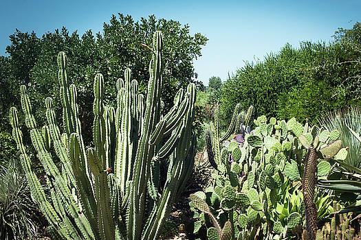 Desert Garden by Catherine Lau