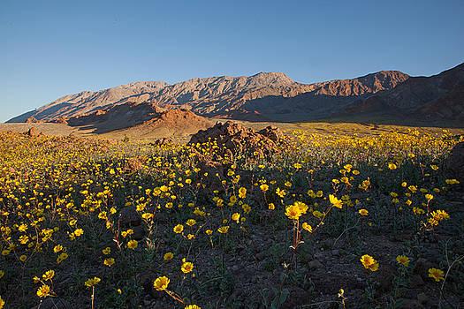Susan Rovira - Desert Gold on Badwater Road