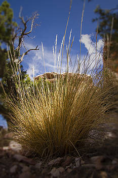 Desert Grass by Margaret Guest