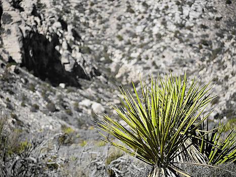 Desert Green by Rae Tucker