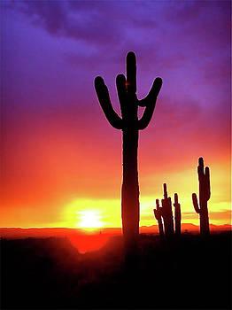 Desert Guardians by Terry Medaris