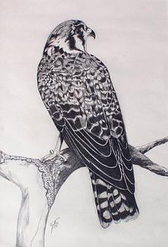 Desert Hawk II by Suzette Kallen