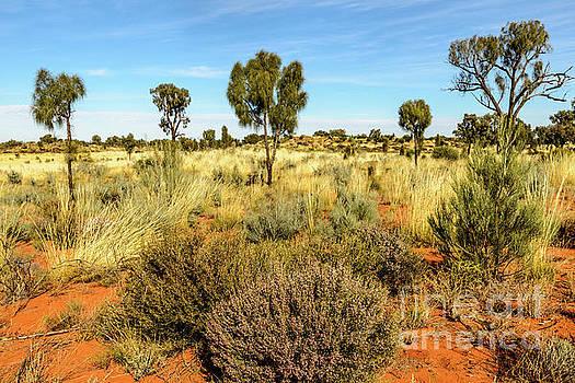 Desert Landscape 03 by Werner Padarin
