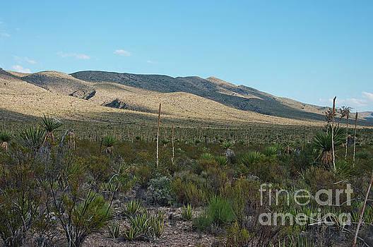 Desert Landscape by Lisa Holmgreen