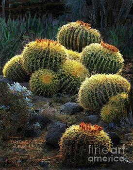 Desert Lanterns by Melinda Hughes-Berland
