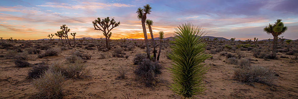 Desert Life by ChrisAntoniniPhotography