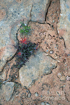 Desert Life II-372 by John  Fix