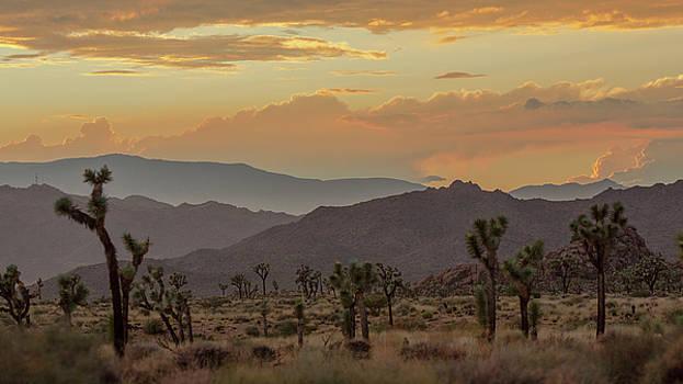 Desert Magic by Smoked Cactus