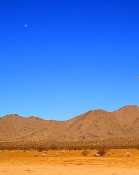 Desert Moon by Kendra Palmer