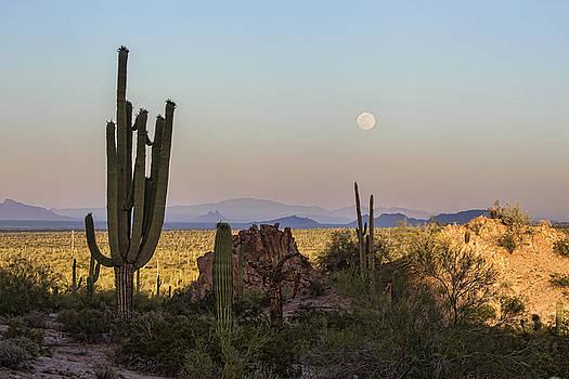 Desert Moon Rising by Ryan Seek