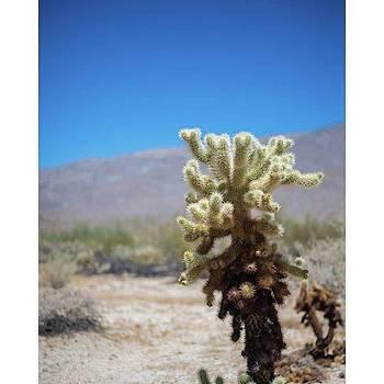 desert #nikon #nikonphotography by Allen Solomon