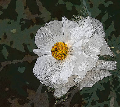 Desert Poppies by Marna Edwards Flavell