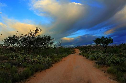 Desert Road by Kimmi Craig