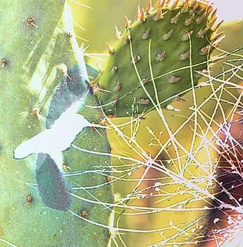 Desert Spring by Kathy Bassett