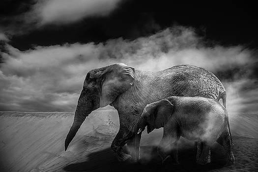Desert storm by Christine Sponchia
