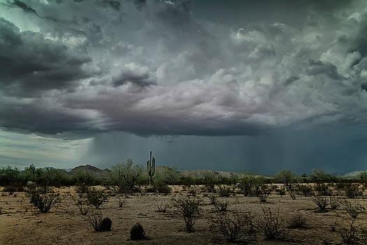 Desert Summer Rains by Saija Lehtonen