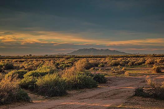 Rosemary Woods-Desert Rose Images - Desert Sunrise-IMG_583017