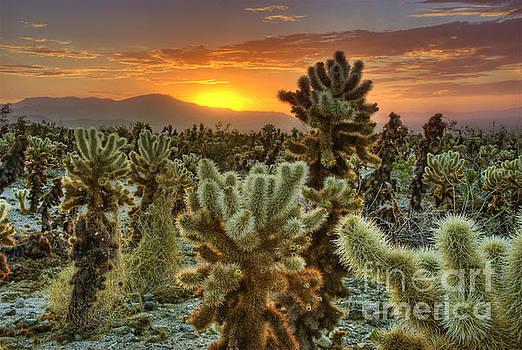 Desert Sunrise by Nick Carlson
