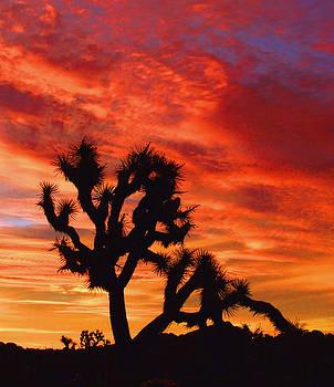 Desert Sunrise by Tom Kidd