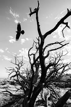 Desert Takeoff by Nathan Larson