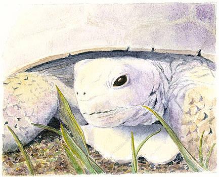 Desert Tortoise  A Portrait by Wicki Van De Veer