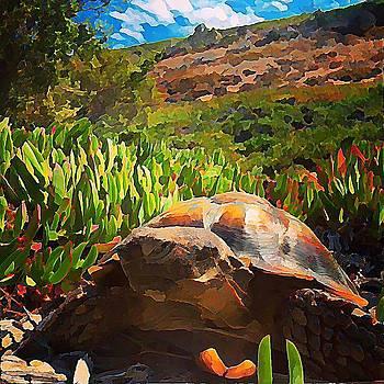 Desert Tortoise by Raven Hannah