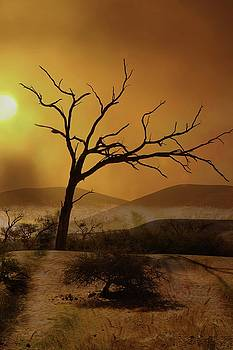 Desert Tree 2 by Jaqueline Briel