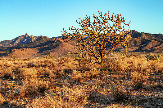 Desert Tree and Hualapai Mountains by Bonnie Follett