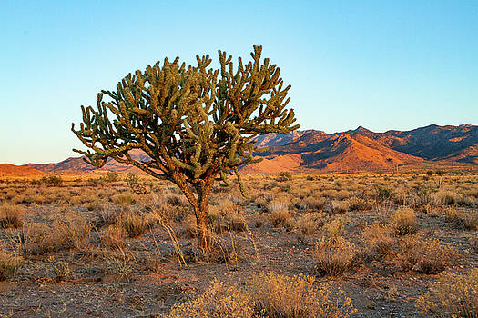 Desert Tree at Sunset Hour by Bonnie Follett
