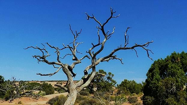 Desert Tree by Barkley Simpson
