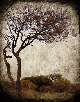 Desert Tree by Sonia Stewart