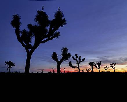 Desert Trip II by ChrisAntoniniPhotography
