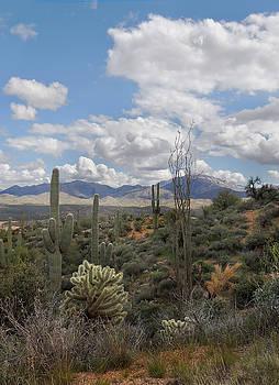 Desert Vista by Gordon Beck