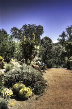 Desert Walkway by Lynn Geoffroy