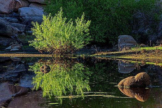Ralph Nordstrom - Desert Watering Hole 2015