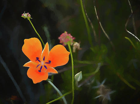 Desert Wildflower 2 by Penny Lisowski